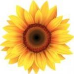 Sunflower Fiona Brennan